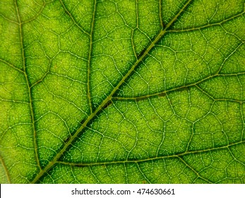 Texture tree leaf abstract background