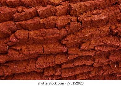 Texture of a tree from mahogany. Orange tree bark