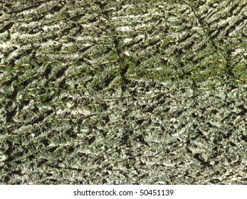 texture of the tree skin