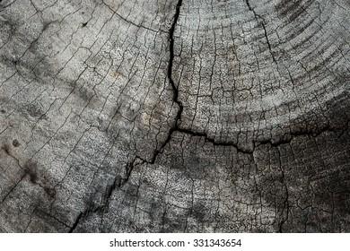 texture of tree stump,