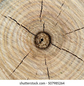 Texture of tree stump with tree rings