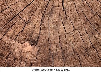 texture of tree stump vintage backgroud
