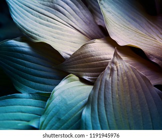 texture of tropical foliage, neon light.