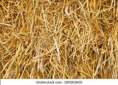 texture, uniform yellow straw in a stack