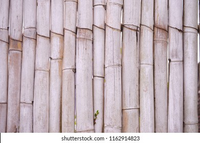 Texture of vertical bamboo stems.