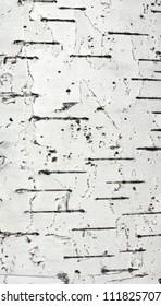 the texture of white birch bark