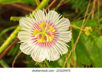 Texture of White Flower or Grass flower.