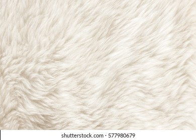 Texture of white shaggy fur.