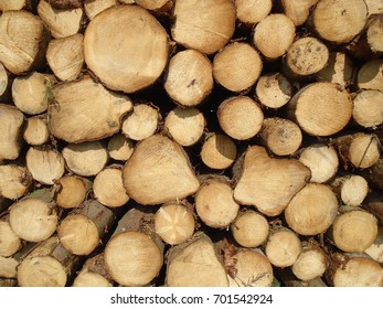Texture and wood background