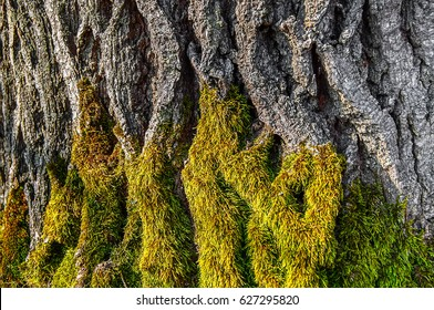 the texture of the wood overgrown with moss