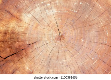 texture of wooden tree trunk background.