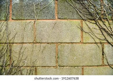 Fondo texturizado de pared de ladrillo con sedgerow
