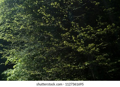 Textured green branches of a leafy tree
