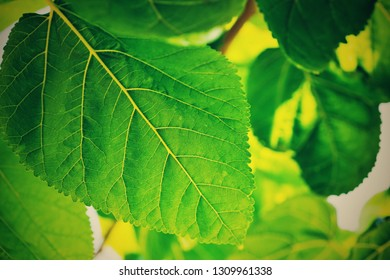 the textured green leaf closeup for an abstract natural background