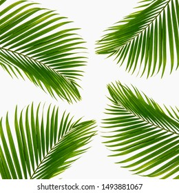 Textured leaves abstract green nature background tropical leaves coconut leaves Isolated on white background