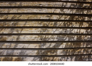 Textured old clapboard weatherboard wooden wall with tree shadows.