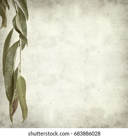 textured old paper background with Alii fig branches
