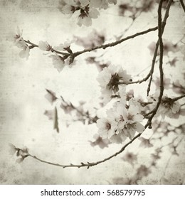 textured old paper background with almond trees blooming