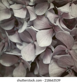 textured old paper background with blue lilac hydrangea