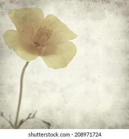 textured old paper background with California poppy