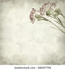 textured old paper background with carnation flower