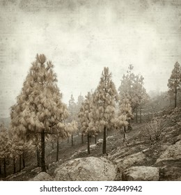 textured old paper background with central Gran Canaria pine forests after fire 2017