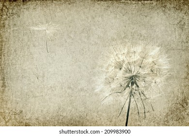 Textured old paper background with dandelion and seed blowing away. Vintage style. Copy space is available