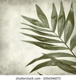 textured old paper background with dark green leaf of Chamaedorea elegans, parlour palm