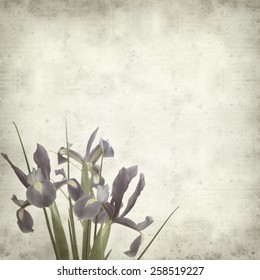textured old paper background with dark pirple iris flowers