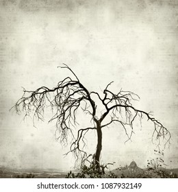 textured old paper background with dead dry tree
