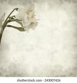 textured old paper background with doule narcissi