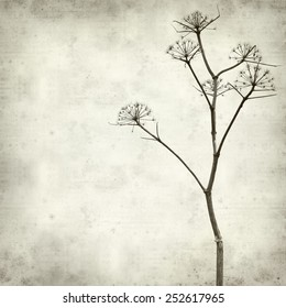 textured old paper background with dry dead fennel seed stalks
