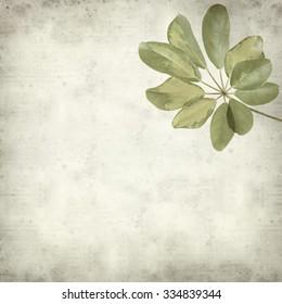 textured old paper background with dwarf Umbrella Tree Leaf