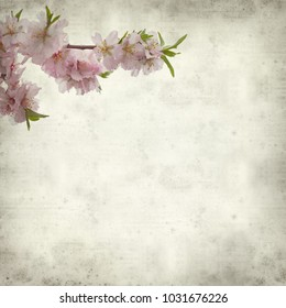 textured old paper background with flowering almond branches