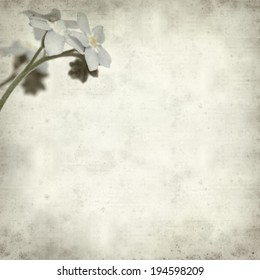 textured old paper background with forget-me-not