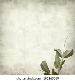 textured old paper background with garden pea shoots