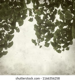 textured old paper background with Ginkgo biloba branches with green leaves