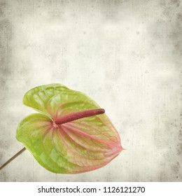 textured old paper background with green and pink exotic Anthurium flowers