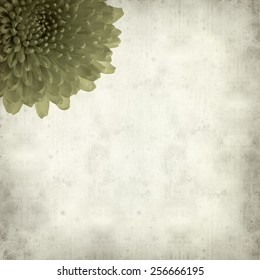 textured old paper background with green Chrysanthemum