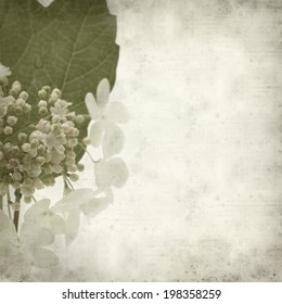 textured old paper background with guelder rose