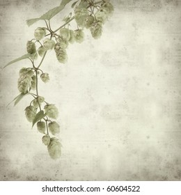 textured old paper background with hops plant branch