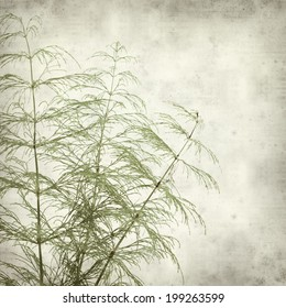 textured old paper background with horsetail plant
