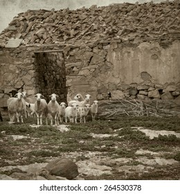 textured old paper background with landscape of Fuerteventura and sheep