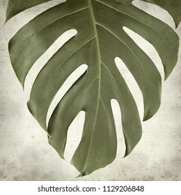 textured old paper background with large shiny monstera leaf