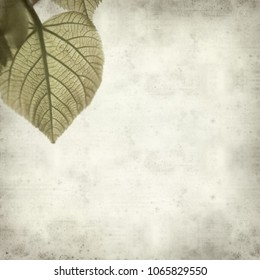 textured old paper background with linden tree opening leaves