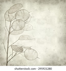textured old paper background with Lunaria annua, silver dollar plant