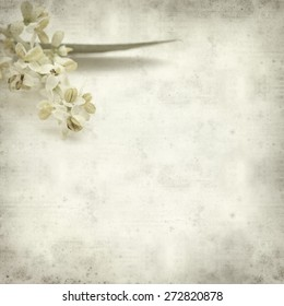 textured old paper background with olive tree flowers