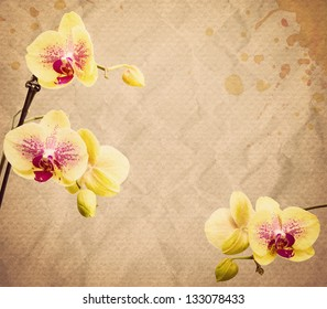 textured old paper background with orange and pink orchid