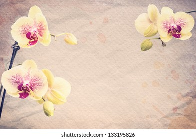 Textured old paper, background with orange and pink orchid