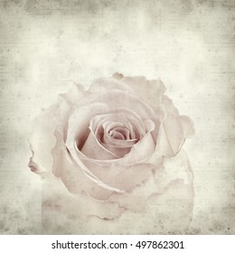 textured old paper background with pale pink rose
